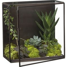 Nalini Shadow Box - Terrarium | Crate and Barrel. This steel and glass…