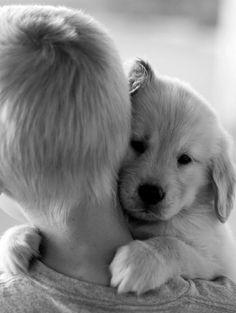 Sweet puppy love!