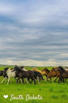 Wild Mustangs on the plains of South Dakota // 8 Amazing South Dakota Attractions | The Planet D Adventure Travel Blog: