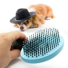 Useful Head & Body Hair Brush For Dogs With Thin Pin   Tag a friend who would love this!   FREE Shipping Worldwide   Buy one here---> https://gleepaw.com/useful-head-pet-dog-hair-brush-plastic-wire-thin-pin-cat-comb-rakes-round-best/
