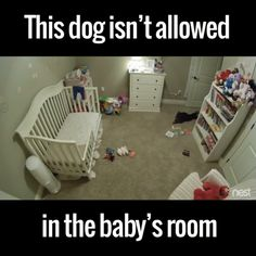 Take that stupid baby! Funny Animal Memes, Dog Memes, Funny Animal Videos, Funny Animal Pictures, Cute Funny Animals, Cute Baby Animals, Funny Cute, Funny Dogs, Animals And Pets