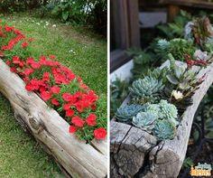 Essa é uma dica que você pode copiar neste final de semana! Que tal reaproveitar o tronco que está parado no seu jardim para cultivar plantas?