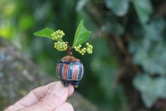 Super mini bonsai creation of Murasakishikibu- Murasaki shikibu, or Japanese beauty berry. Callicarpa japonica,