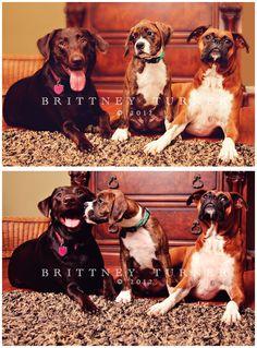 Pet Photography  Dog Photography