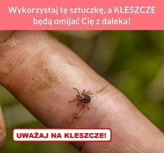 Wykorzystaj tę sztuczkę, a KLESZCZE będą omijać Cię z daleka! Health Quiz, Health Goals, Health Advice, Health Fitness, Herbal Remedies, Natural Remedies, Good To Know, Health And Beauty, Helpful Hints