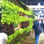 @gardengeri I hope this years trend in #lifestyle is #growyourown vertical to grow MORE like this #FlowerShow share : http://twitpic.com/8tz829