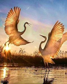 Pretty Birds, Beautiful Birds, Animals Beautiful, Nature Animals, Animals And Pets, Cute Animals, Exotic Birds, Colorful Birds, Bird Pictures