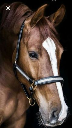 Beautiful Horse Pictures, Most Beautiful Horses, Animals Beautiful, Cute Horses, Pretty Horses, Horse Love, Cavalo Wallpaper, Horse Wallpaper, Horse Artwork