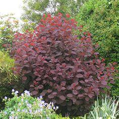 1000 images about arbres et arbustes pour petit jardin on for Arbre feuillage persistant pour petit jardin
