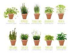 HUERTO URBANO EN MI JARDÍN nos revela los beneficios de las mejores plantas aromáticas, esas que no pueden faltar en nuestra casa.