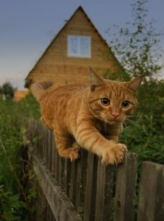Riding the fence.