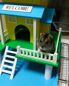 This established homeowner even has a wraparound porch. | 16 Hamsters Livin' The Freaking Dream