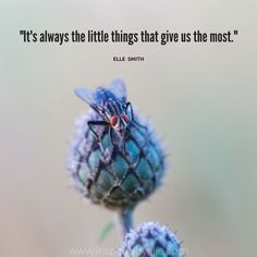 Wisdom quote by Elle Smith about the little things in life. Wisdom Quotes, Life Quotes, Insprational Quotes, Insightful Quotes, Fb Covers, Motivational Words, Good Advice, Woman Quotes, Little Things