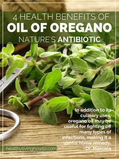 Oil Of Oregano: 4 Health Benefits of Nature's Antibiotic | healthylivinghowto.com  Only use therapeutic grade oils - Young Living Essential Oils.