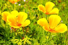Flower。。。花