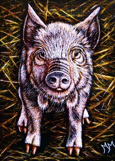 NEW! Pig ACEO ORIGINAL Scratchboard Art Card PIGLET Baby Farm Animal Painting MM #Miniature