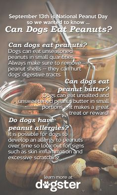 Can dogs eat peanuts? Find out at Dogster. Dog Nutrition, Puppies Tips, Diy Dog Treats, Dog Information, Can Dogs Eat, Dogs Of The World, Happy Dogs, Dog Care, Animals For Kids