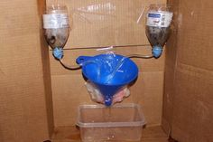 Kidney Filtration Purpose: Model how kidneys filter blood. Materials: Cornstarch Iodine Water Two drinking glasses Measuring cups Measuring spoons Sandwich baggie Twist tie  Procedure: Add one teaspoon of cornstarch to 1/8 cup of water.   Stir. Add 3/4 cup of hot water and stir well. Measure 1/4 cup of cornstarch mixture… …and pour into sandwich baggie. …