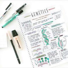 Genetics study notes // follow us @motivation2study for daily inspiration