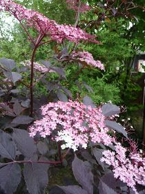 Ma Terre De Bruyere Juin 2013 Amenagement Jardin Beaux Jardins