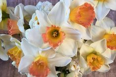 Pink Charm, Daffodils. Available in Early Spring.