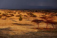 Scenery along the road to Awassa