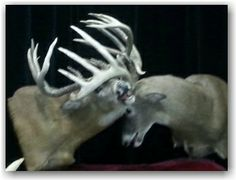 Mount displayed at Monster Buck Classic.
