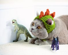 Cats in hats: Feline fashion at its finest (PHOTOS) | OregonLive.com