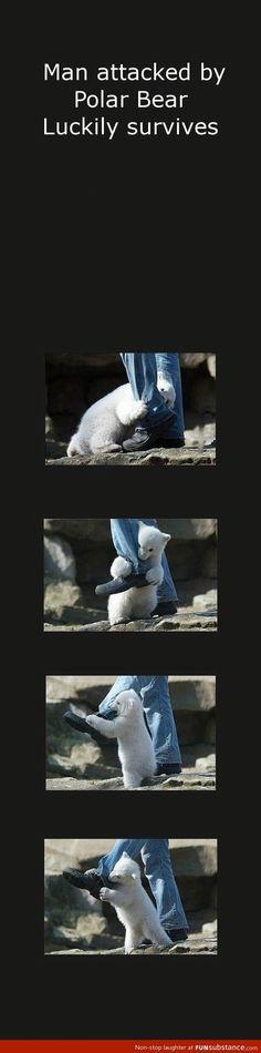 Man attacked by polar bear survives - FunSubstance.com
