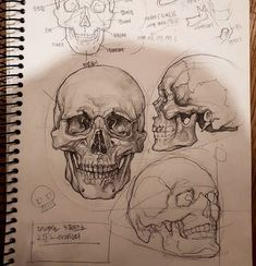 """10.7k Likes, 73 Comments - Art Featuring Page (@art.nights) on Instagram: """"This study of skull is perfect ✌ done by @harin_kim16  Follow our art assistant page…"""""""