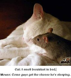 Cat: I smell breakfast in bed. Mouse: Come guys get the cheese he's sleeping.