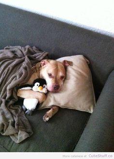 Cute Animals. Snuggles.
