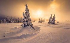 do.st_Feldberg, Baden-Wurttemberg. Goldener Winter ....im Hochschwarzwald am vergangenen Sonntagabend.  Die Natur hatte sich mal wieder selbst übertroffen. #schwarzwald #landschaft #berge #schnee #winter #wald #sonnenuntergang #gold #meinbw #feldberg #wolken #ig_deutschland #badenwürttemberg  #clouds #blackforest #sunset #mountains #forest  #snow #ig_blackforest
