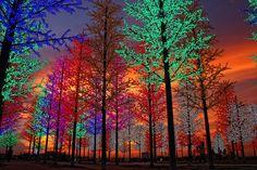 Christmas Lights - Selangor, Malaysia