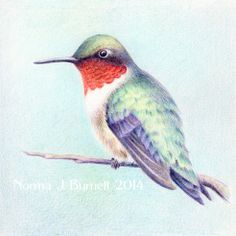 Ruby-throated humming bird - 5x5 inches, color pencil on Stonehenge paper