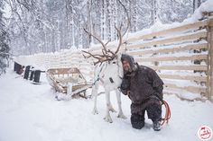 Ferme de rennes Rovaniemi Ski, Safari, Guide, Outdoor, Polar Night, Snowmobiles, Aurora Borealis, Rennes, Outdoors