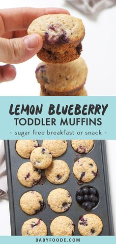 These healthy blueberry and lemon muffins are the perfect summer breakfast, snack or even a treat for your toddler or big kid! They're easy, sugar free, healthy, and most importantly completely make ahead. This lemon blueberry muffins are perfect to pack for a snack or on-the-go breakfast. Summer break breakfast winning! #muffins #toddlers #snacks #breakfast #kidfriendly Mini Blueberry Muffins, Lemon Muffins, Mini Muffins, Breakfast Muffins, Blueberry Breakfast, Breakfast Potatoes, Blueberry Drinks, Sugar Free Muffins, Baby Muffins