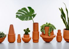 MPGMB's homeware includes terracotta cacti pots