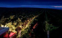 Primeira colheita noturna mecanizada do Brasil - http://superchefs.com.br/primeira-colheita-noturna-mecanizada-do-brasil/ - #GrupoMiolo, #MioloGroup, #Noticias, #SeivalState, #Vinhos, #Wine