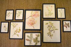 Easy craft project framing old botanical illustrations to make our house feel more like a nature-lover's home (via HipChickDigs)