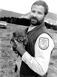 USFWS biologist with Gray Wolf pup from the first litter born to Yellowstone wolves, 1995. Credit: U.S. Fish and Wildlife Service.