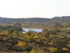 Duinen en bos in Schoorl en omgeving