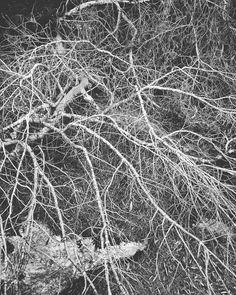 #cartagenaspain  #naturephotography #naturephoto #blackandwhite #blackandwhitephotography