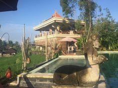 EARLY BIRD TILBUD: SPAR 975,00 kr.  Spirituel yoga og meditationsretreat på Bali | 9. - 17. april eller 9. - 17. september 2017 - Dette retreat byder på noget for både krop og sjæl. Udover daglig yoga og meditation får du også smukke og unikke naturoplevelser på Bali.   Turen henvender sig primært til dig som har lidt/nogen erfaring med yoga. Hvis du ikke har stiftet bekendskab med