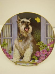 Minature Schnauzer Plate Spring Arrivals by Christopher Nick