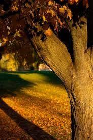 Image result for Autumn in London via pinterest
