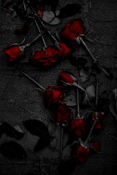Super Ideas For Photography Dark Beauty Fantasy Gothic Rose Wallpaper, Wallpaper Backgrounds, Gothic Wallpaper, Black Flowers Wallpaper, Red And Black Wallpaper, Red Aesthetic, Aesthetic People, Gothic Art, Dark Beauty