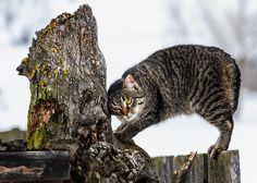 Lazy Cat On The Fence - by Attila Simon