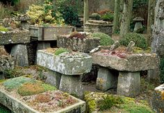 Rock gardens are a budget\u002Dfriendly way to turn a steep slope or tiny lawn into something beautiful. Horticulturist and author Joseph Tychonievich offers tips.