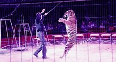 Can you believe that the UK still has circuses that force lions, tigers, raccoons and other animals to perform stupid tricks?
